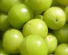 Amla, Indian Gooseberry