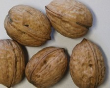 Persian Walnut, English Walnut